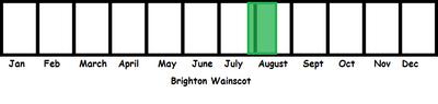 Brighton Wainscot TL