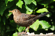 Birds.2009 070