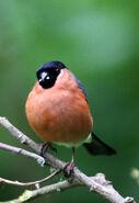 Birds.2010 1491
