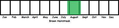 Brown Hairstreak TL