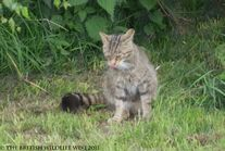 Wildcatsteve