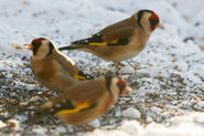 Birds.2010 032