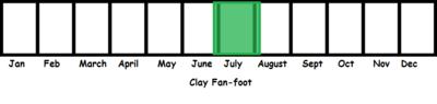 Clay Fan-foot TL