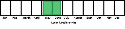 Lunar Double-stripe TL