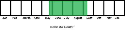 Common Blue Damselfly TL