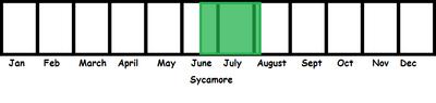 Sycamore TL
