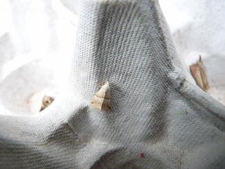 Eublemma parva ~ Small Marbled