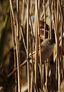 Birds.2010 2425