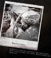 Thumbnail for version as of 14:55, November 19, 2014