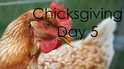 ChicksgivingDay5