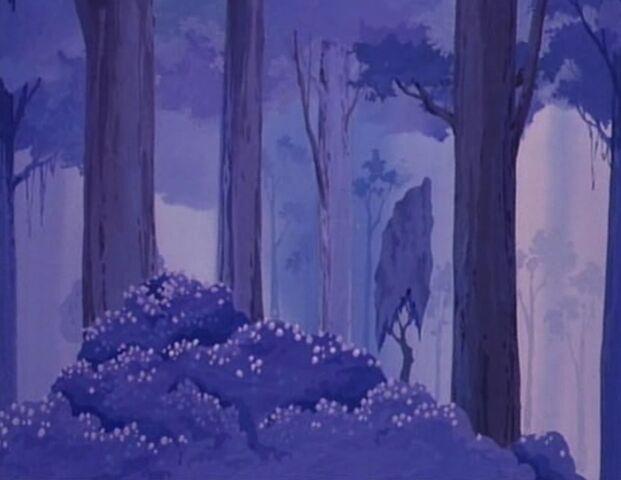File:Silent-forest.jpg