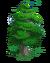 Debris-evergreen