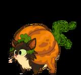 Pumpkin Teen