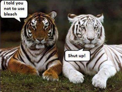 File:Tiger bleach.jpg