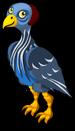 Vulturine Guinea Fowl single