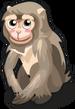 Barbary Macaque single