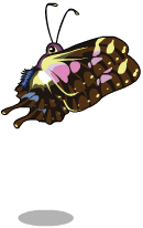 Purple spotted swallowtail an