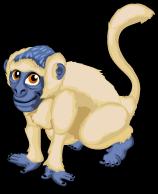 Vervet Monkey single