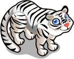 White Siberian Tiger single