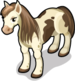 Highland Pony single