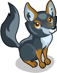 Darwin's Fox single