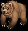 Kodiak bear single