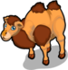 Bactrian Camel single