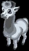 Grey alpaca single