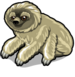 Pygmy 3 toed sloth single