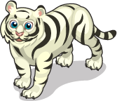 White Bengal Tiger single