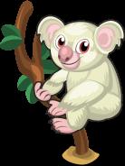 Albino Koala single