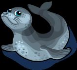 Leopard Seal single