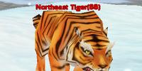 Northeast Tiger