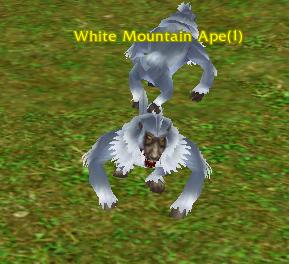 White Mountain Ape