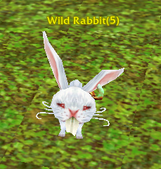 File:Wild Rabbit.png
