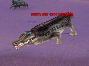 South Sea Crocodile