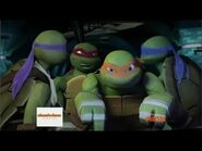The Turtles!