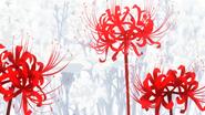 Symbolism (Kaneki's Psychological Transformation)