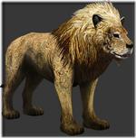 Lion thumb