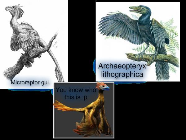 File:Archaeoraptor.png