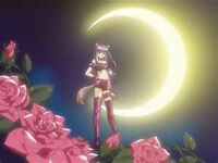 Zakuro moonlight