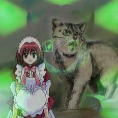 Ichigo with a Iriomote Wildcat