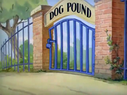 Puttin' on the Dog - Dog Pound
