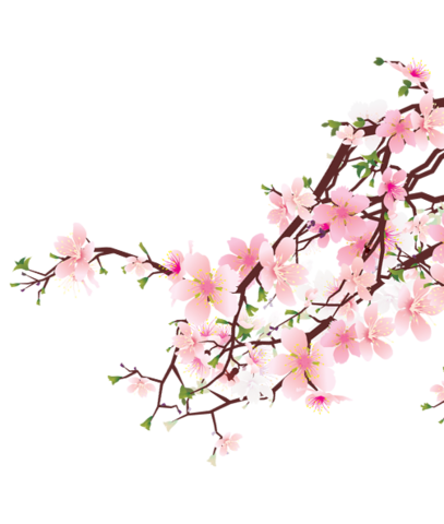 File:Cherry-blossoms 1.png