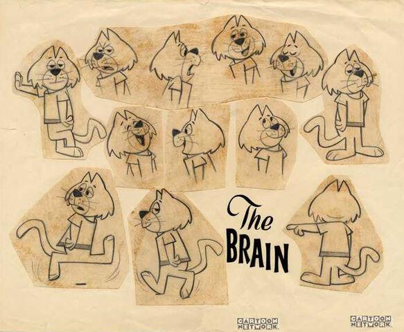 File:Brainmodelsheet.jpg