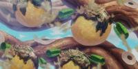 Okonofruit