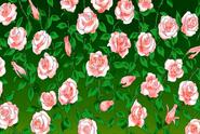 Rose Meat bush