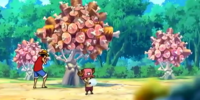 Árbol de Carne