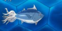 Squid Tuna