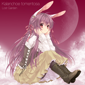 File:Kalanchoe tomentosa Cover.jpg